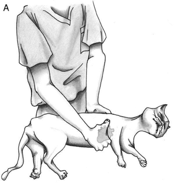непрямой массаж сердца коту