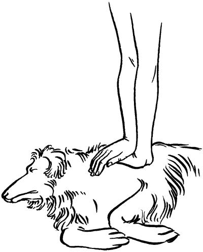 реанимация собаки
