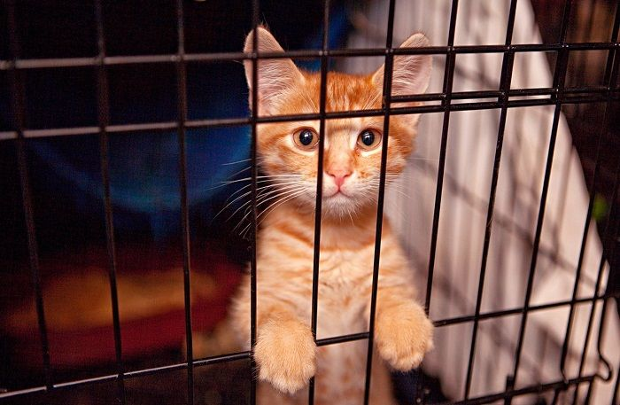 котенок из приюта фото