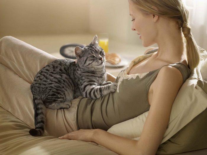 кошка и человек фото