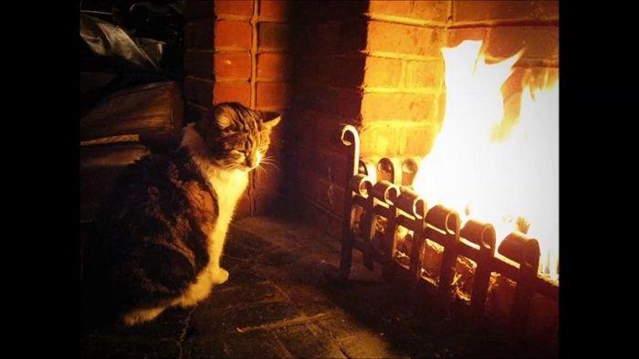 кошка у камина фото
