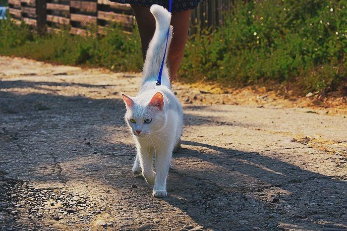 кот на поводке фото