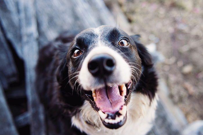 собака фото