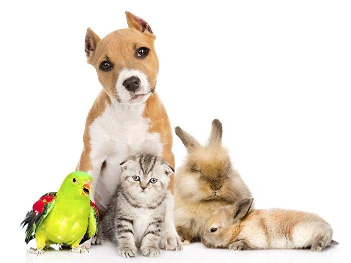 разные домашние животные фото