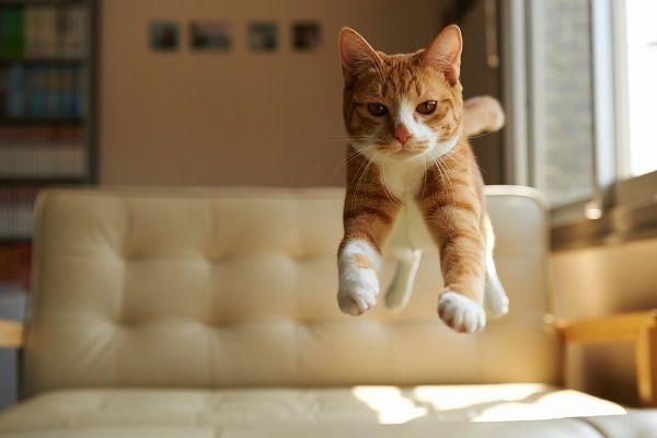 рыжий кот фото