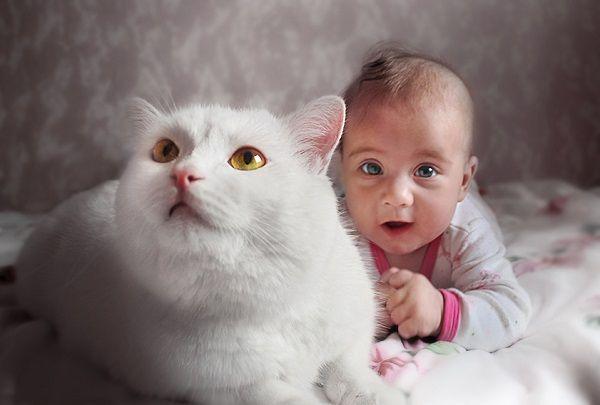 ребенок и кошка фото
