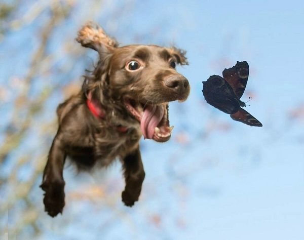 собака в движении фото
