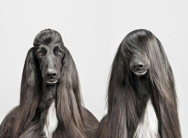 собака с красивой шерстью фото