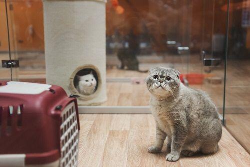 Отель для животных BookingCat фото