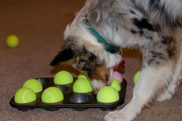 самодельные головоломки для собак