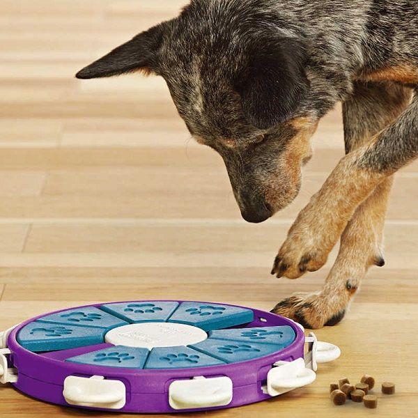 головоломки для собак