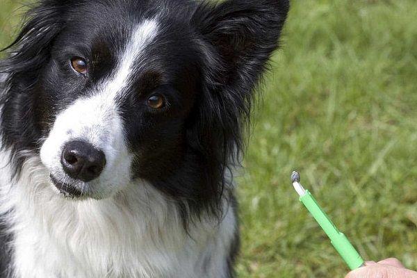 защитить собаку от клещей