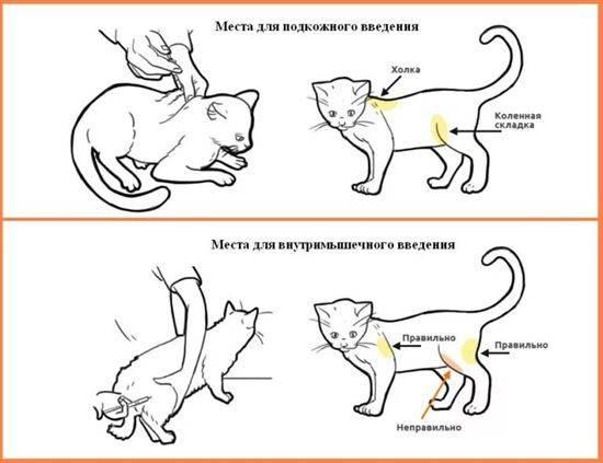 делать укол кошке