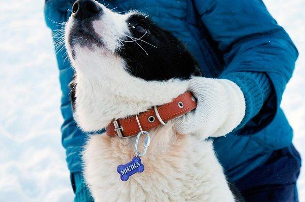 собака в адреснике