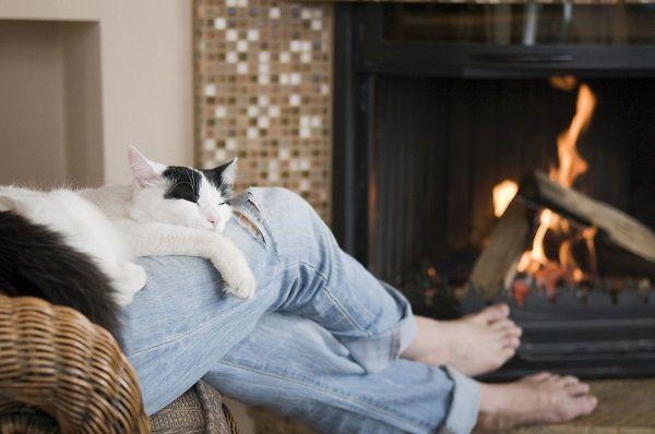 кошка на человеке лежит