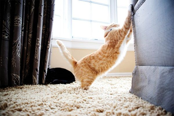 кошка точит когти о мебель