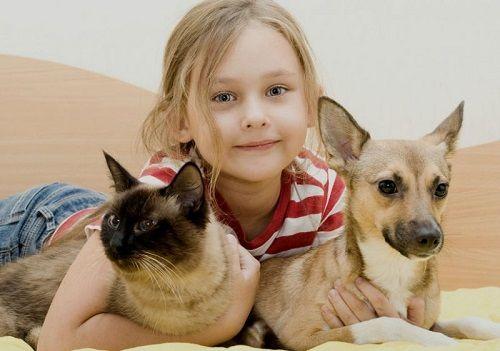 ребенок с кошкой и собакой
