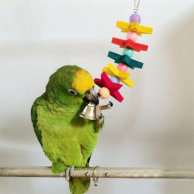 попугай с игрушкой