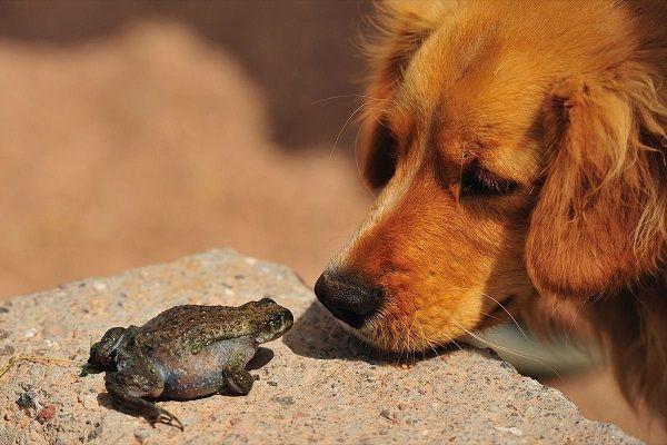 собака смотрит на лягушку
